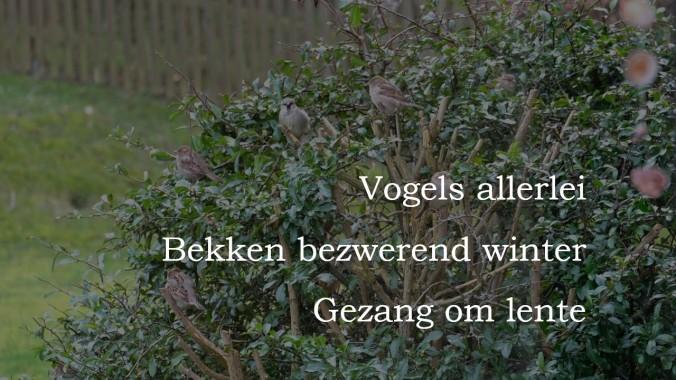 Haiku_25